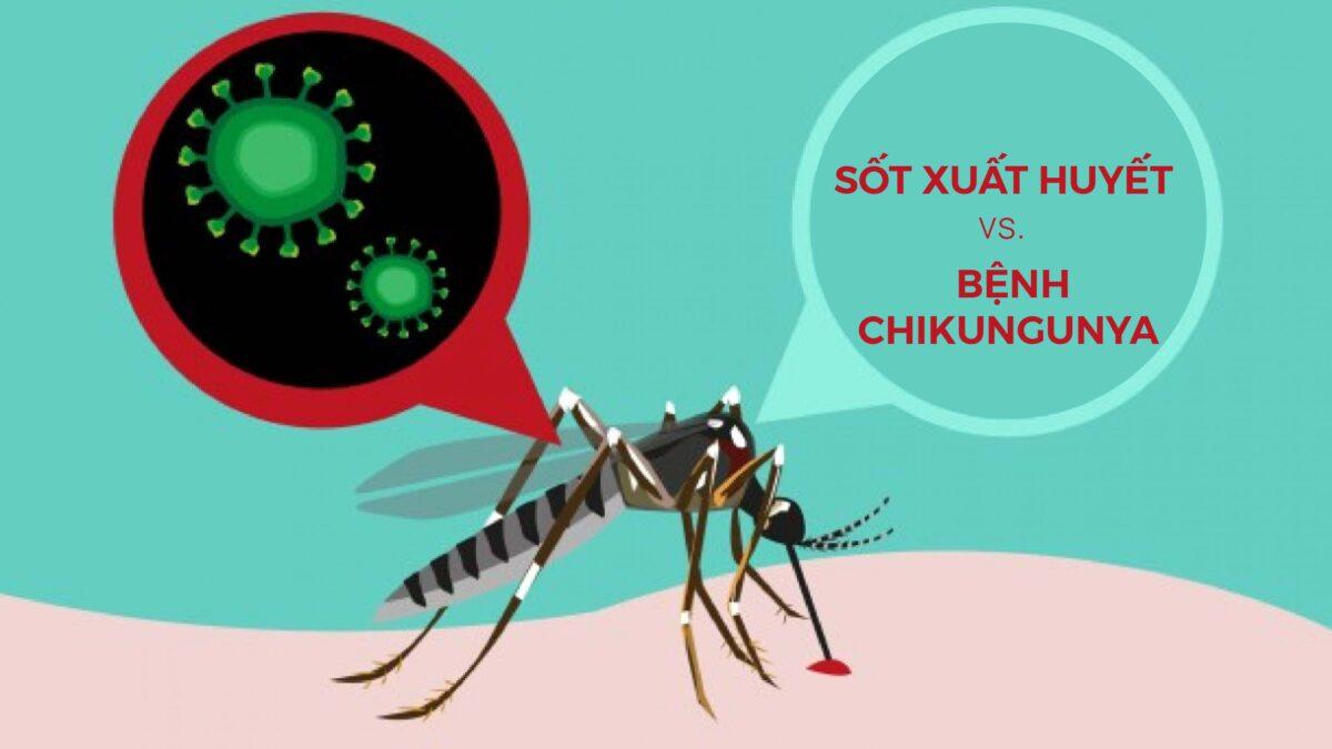 Sốt xuất huyết và bệnh Chikungunya: Sự khác biệt là gì? (1)