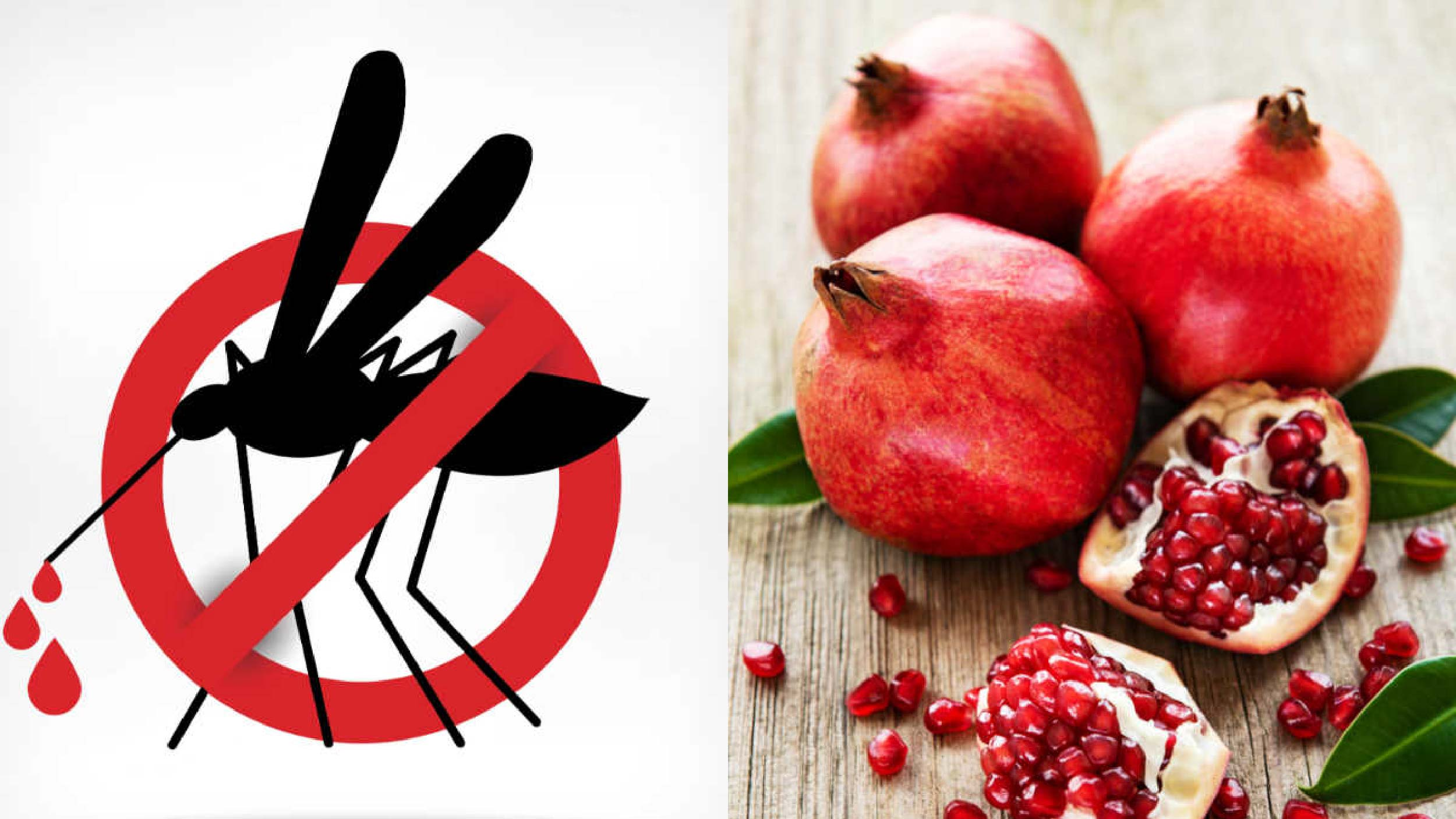 Sốt xuất huyết và Chế độ ăn uống lành mạnh cho người bệnh (3)