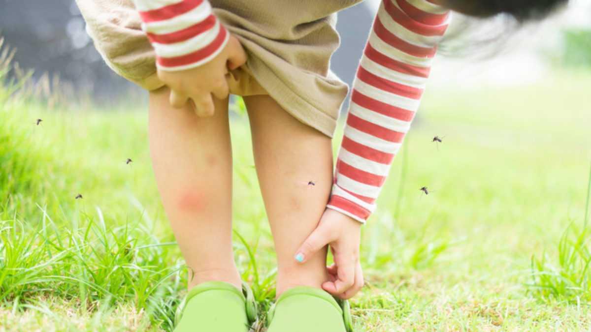 Sốt xuất huyết và sốt rét: Sự khác biệt là gì? (5)