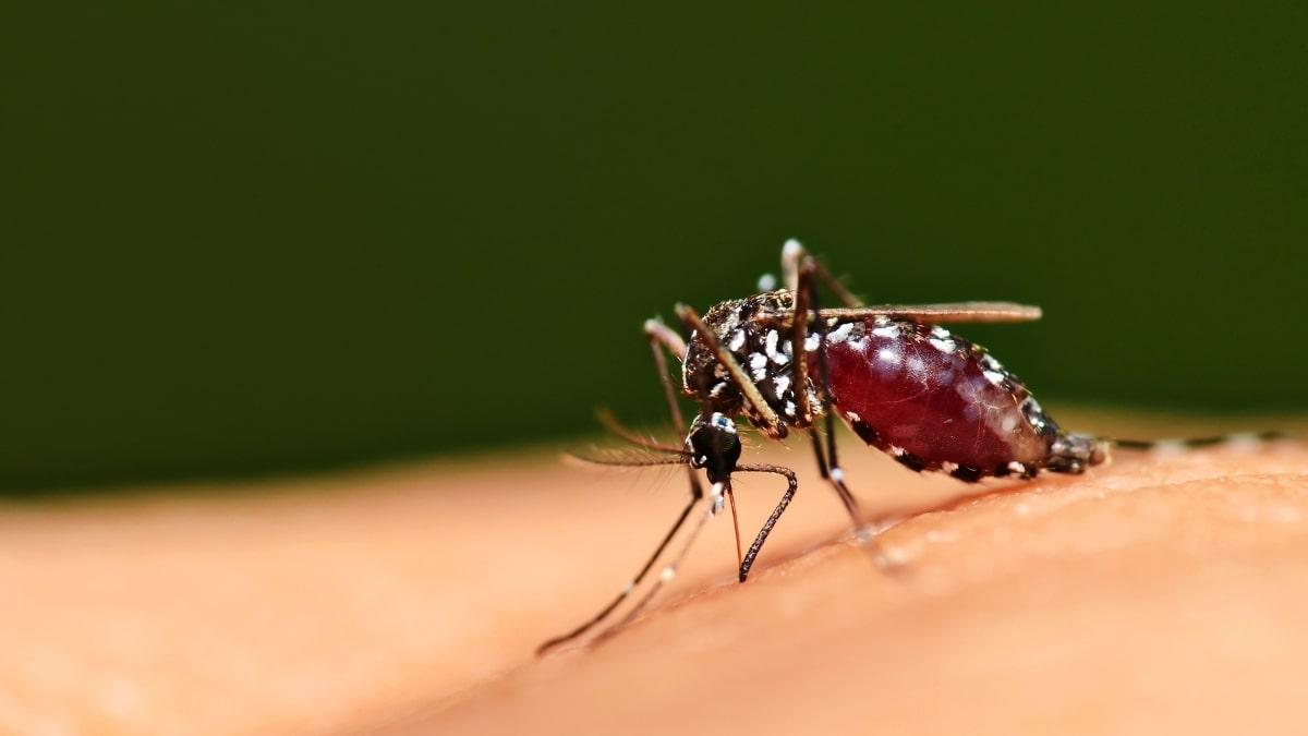 Nhóm máu hay bị muỗi đốt